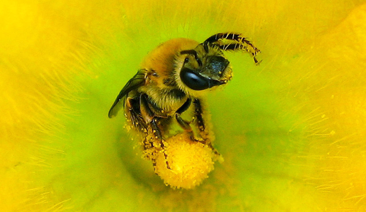Save America's Pollinators Act